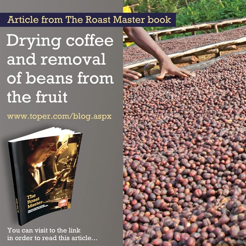 Drying coffee and removal of beans from the fruit